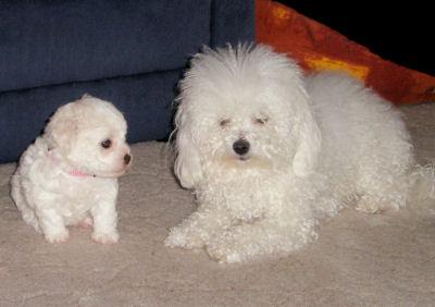 Bessy (Wurf B) + Caisy (Wurf C)